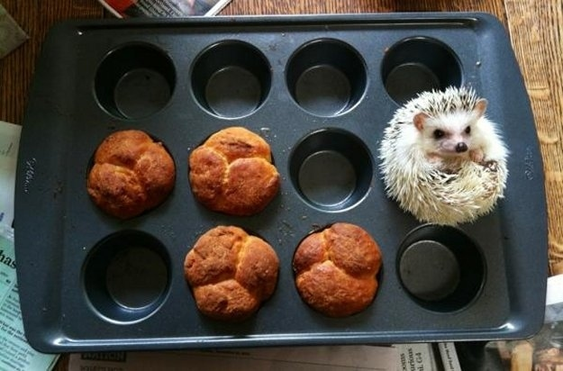 hedgehogmuffin