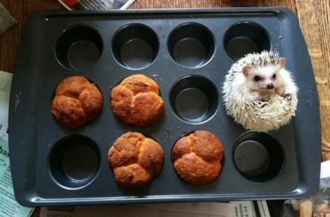 hedgehogmuffin