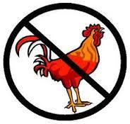 no cocks